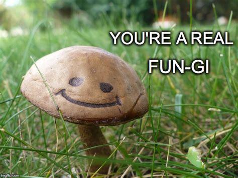 Mushroom Meme - mushroom meme related keywords suggestions mushroom