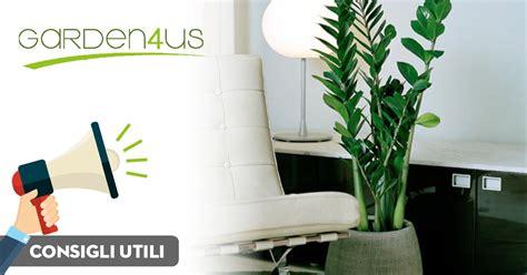piante da interni poca luce 4 piante da interno che crescono con poca luce garden4us