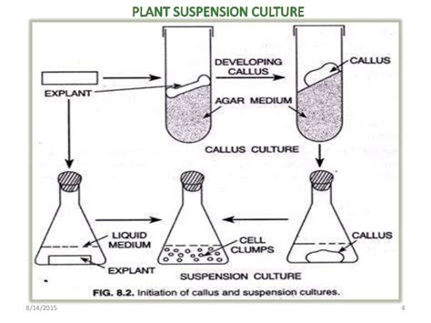 plant cell tissue and organ culture cell suspension bioreactors for plant cell suspension culture