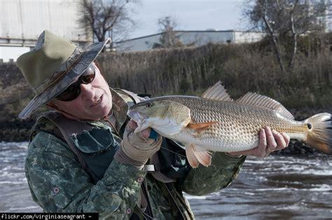 why does fish sometimes taste like ammonia restaurant