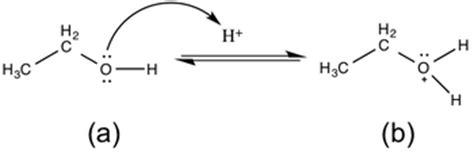 dehydration synthesis definition dehydration synthesis definition reaction exles