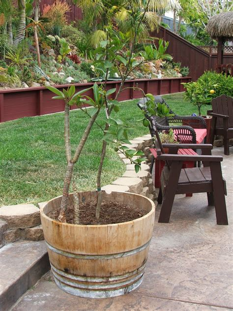 wine barrel planter ideas 187 home decorations insight