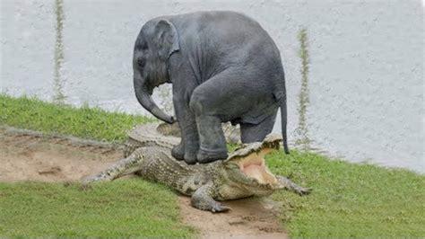 wild animal fights   moments wild