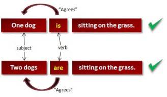 agreement of verb with subject prof shachinegi