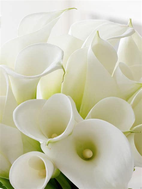 luxury white calla lily globe