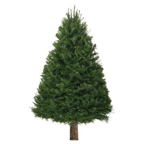 rona christmas trees tree 6 to 8 rona