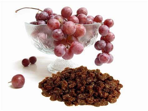 raisins and dogs 12 foods you should never give to your