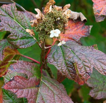 elenco fiori autunnali consegna a domicilio di fiori di stagione in autunno invio