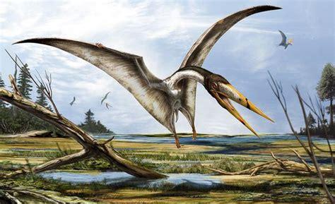 dinosauri volanti alanqa dinopedia fandom powered by wikia