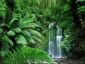 tropical rainforest waterfalls