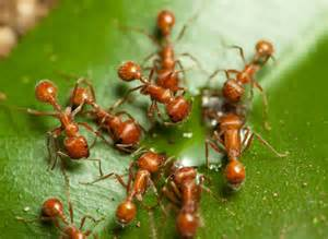 Tiny Red Ants On Patio Pest Control Price List In Mumbai Little Red Ants On Plants