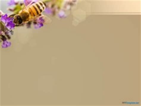 bee powerpoint template free bee ppt template