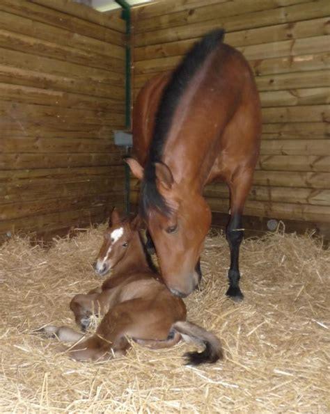 imagenes de animales naciendo ranking de curiosidades sobre los caballos listas en