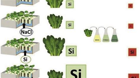 silicio negli alimenti ispa cnr news