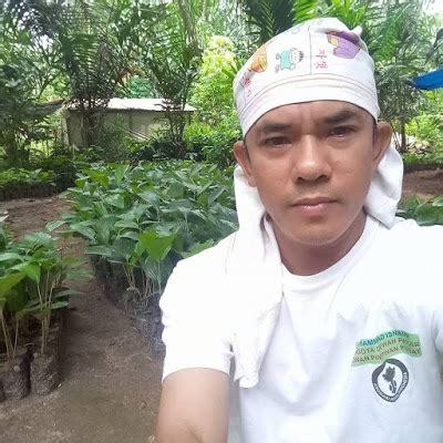 Jual Bibit Kelapa Hibrida Aceh bibit sawit karet dan aren jual bibit mangga unggul