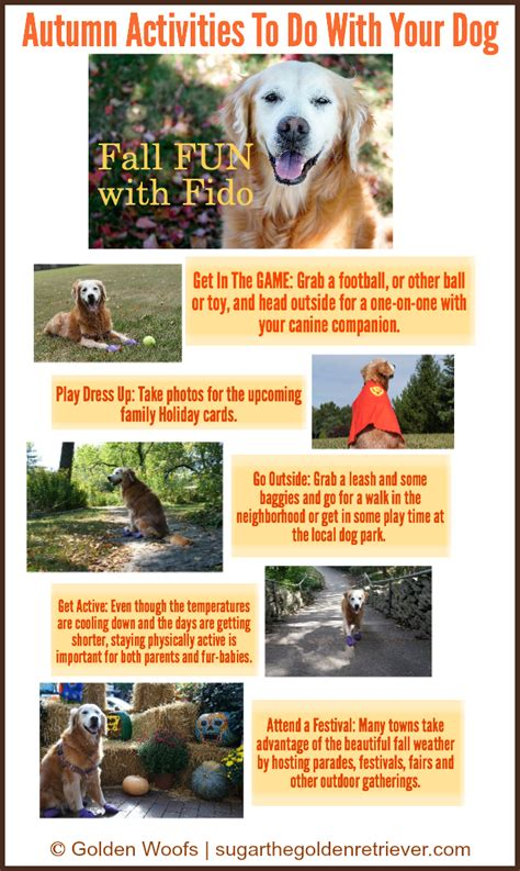 things to do with a puppy fall with fido autumn activities to do with your golden woofs