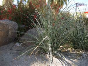 arizona landscape design desert crest press