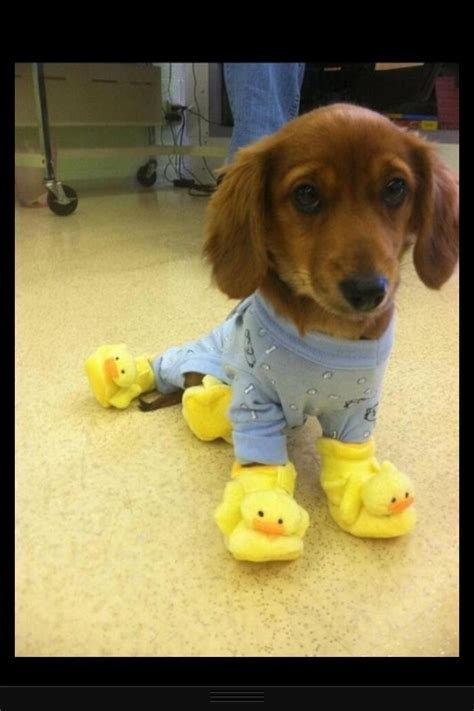 puppy in pajamas puppy in pajamas