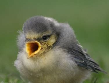 what do baby birds eat what do birds eat