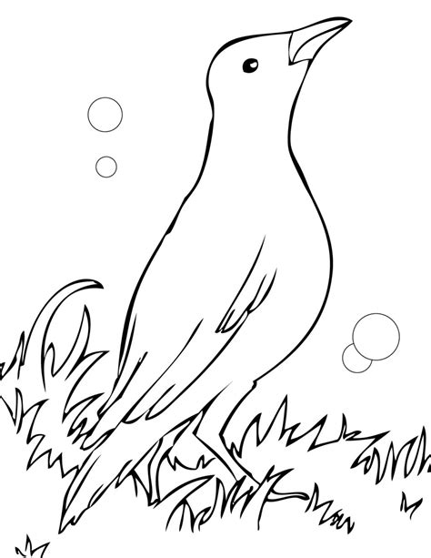 black bird coloring page blackbird free coloring pages