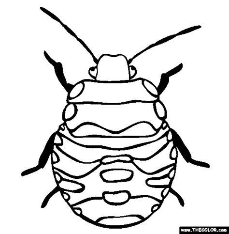 bed bugs color insect online coloring pages page 1