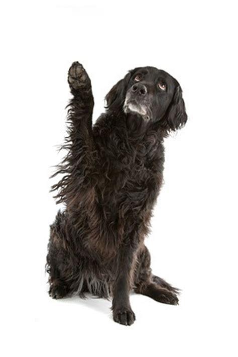 rollmatratze wie lange liegen lassen wie lange kann hunde alleine lassen