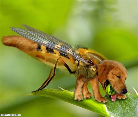 stung by bee pics of dogs stung by bees