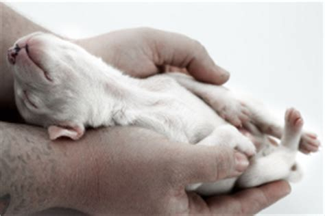 taking care of newborn puppies how to care for new born puppies