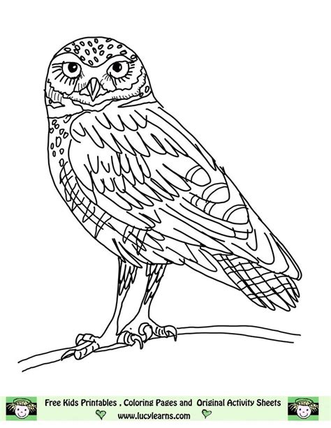 tawny owl coloring page 37 best owls images on pinterest owls owl and birds