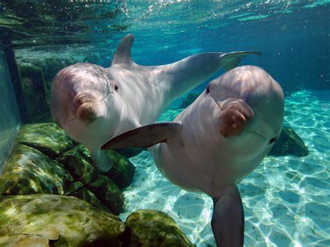 imagenes de animales jpg curiosidades y fotos de animales delf 237 n
