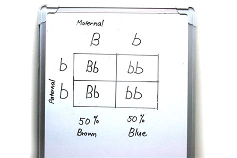 How To Make A Square In A Square Quilt Block by How To Make A Punnett Square 13 Steps With Pictures