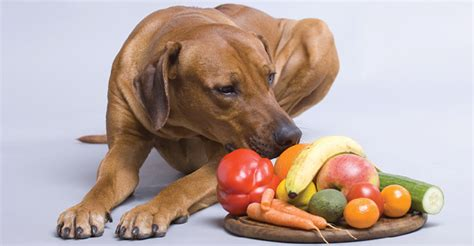 dogs naturally magazine why your s food needs more antioxidants dogs naturally magazine