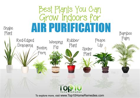 best house plant 10 best plants you can grow indoors for air purification