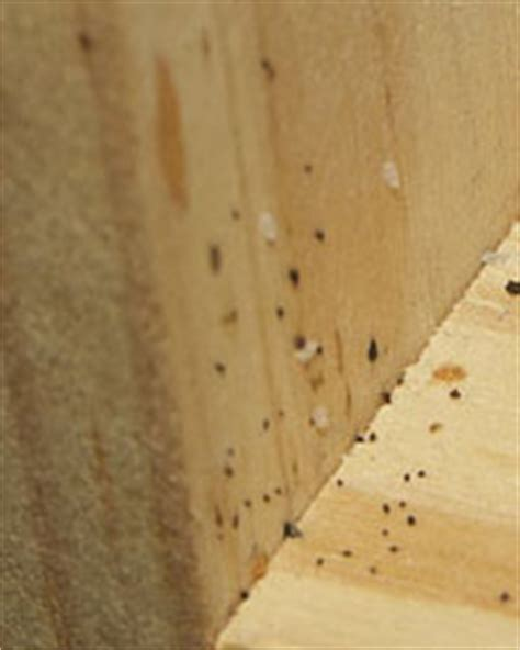 can fleas live in hardwood floors signs of bed bugs bed bug mutts
