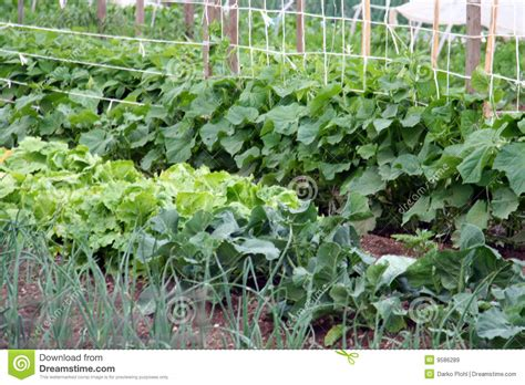 pictures of backyard vegetable gardens a vegetable garden royalty free stock images image 9586289