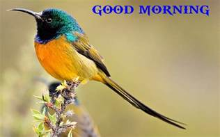 good morning wishes with birds pictures images page 22