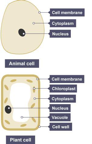 bbc bitesize ks biology cells  systems revision