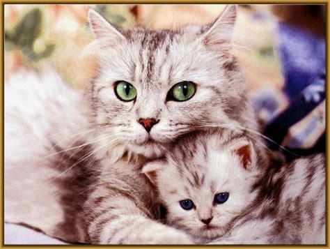 imagenes de te extraño gatitos comparte la mejor foto de gatito tierno gatitos tiernos