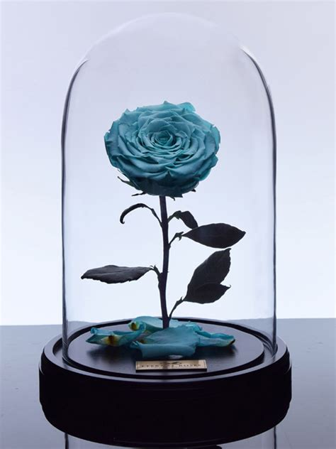 eternal roses the enchanted rose tiffany blue eternal roses