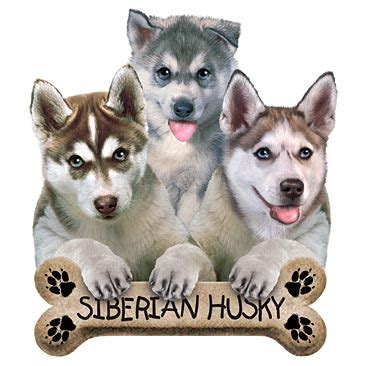 buy a husky puppy buying a husky puppy image search results