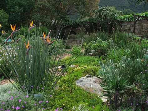 Kirstenbosch Botanical Gardens Indigenous Plants 7 Tips For Creating A Water Wise Garden Africa Geographic