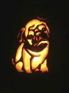 pug pumpkin carving pets pinterest pumpkins pug and