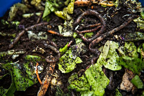 best compost worms best worm composters indoor tray and flow through