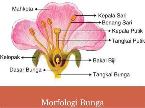 daun  bunga
