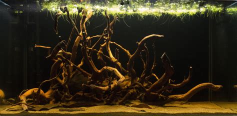 forest uk aquatic plant society