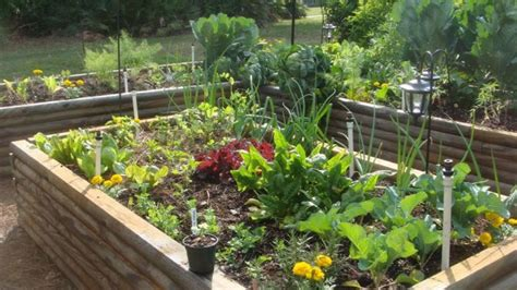 self sufficient vegetable garden gardening 10 best vegetables to plant in