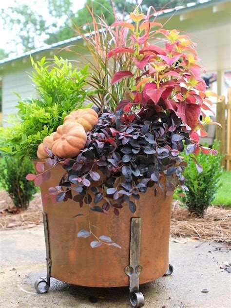 southern living container gardening planting containers with southern living plant collection