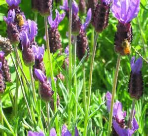 strathcona beekeepers plants