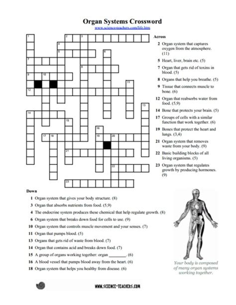 Systems Matching Worksheet Answers by Organ Systems Worksheet Worksheets Releaseboard Free