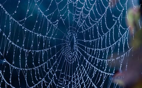 by web 17 spiderweb wallpapers with water drops and